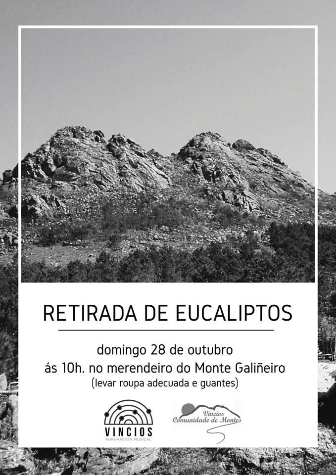 Retirada de Eucaliptos no Galiñeiro @ Merendeiro do Monte Galiñeiro