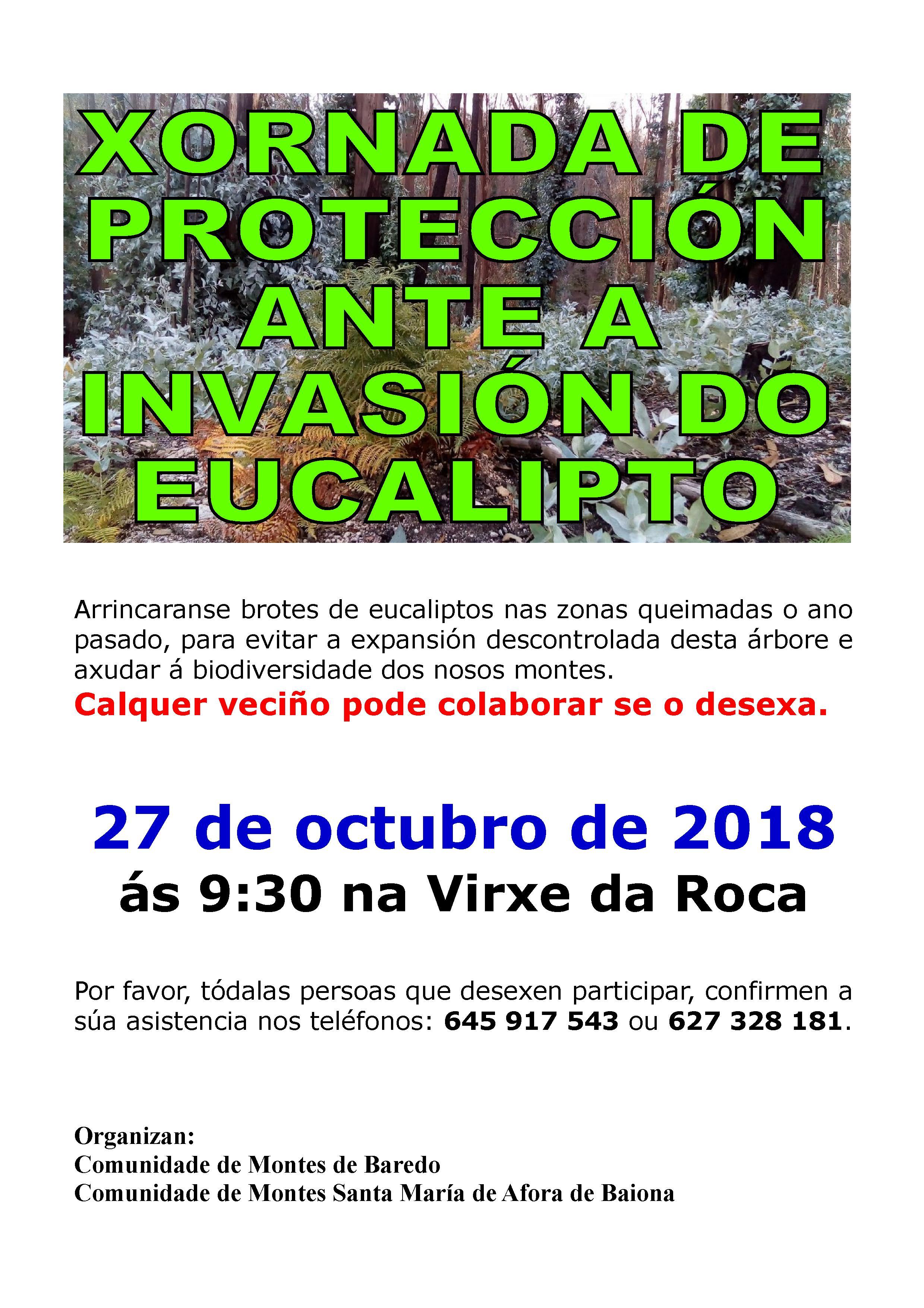 Xornada de Protección ante a Invasión do Eucalipto @ Virxe da Rocha